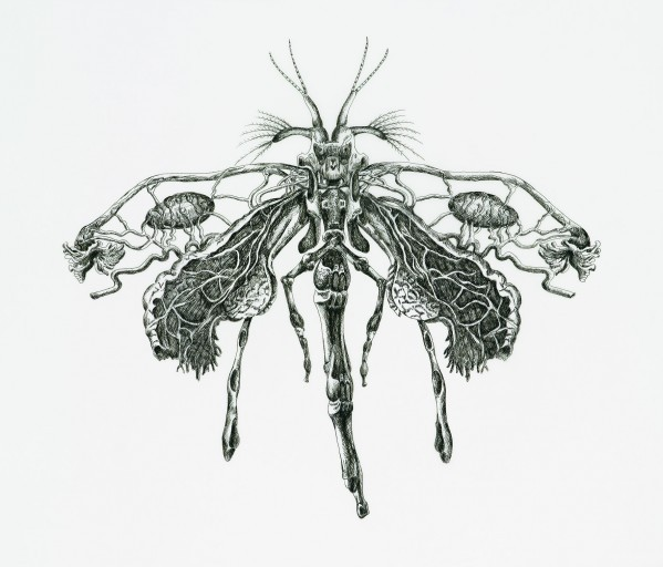 Angela Su, 'Coenagrion luella', 2007, ink on drafting film