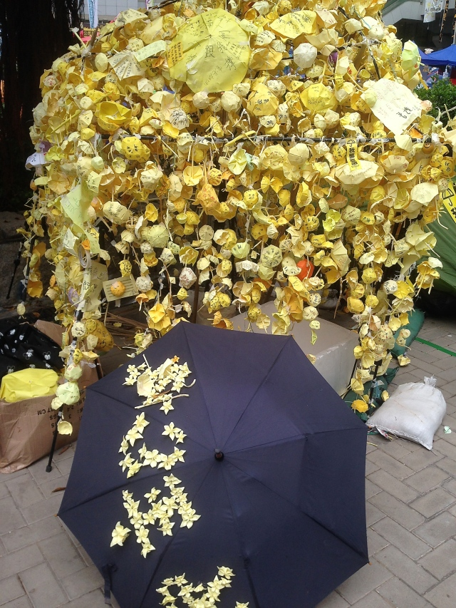 'Umbrella Bush'